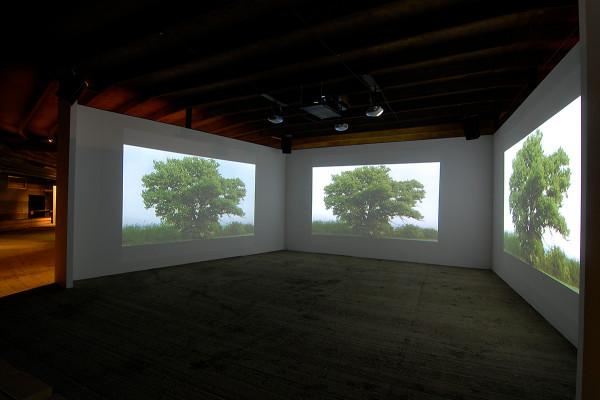 Drei Projektionen eines Baumes auf drei weiße Leinwände