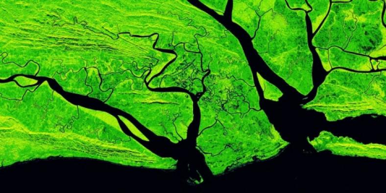 Grüner Hintergrund mit schwarzen Adern
