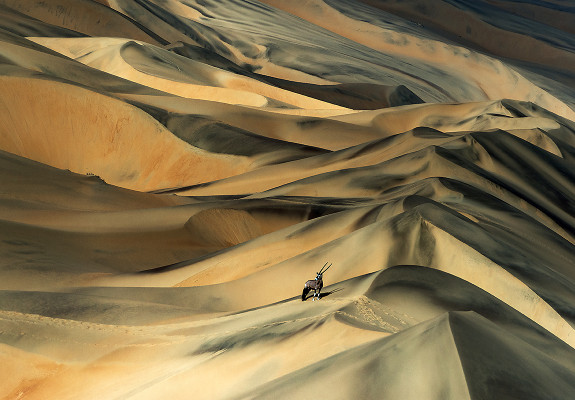 Springbock in einer Wüstelandschaft