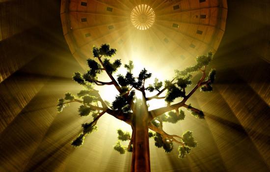 Foto eines von oben beleuchtetem Baum im Inneren des Gasometers.