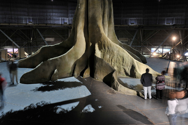 Foto des Fußes der Regenwaldbaumstruktur