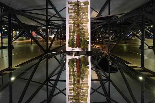 Foto eines Riesenmammutbaum