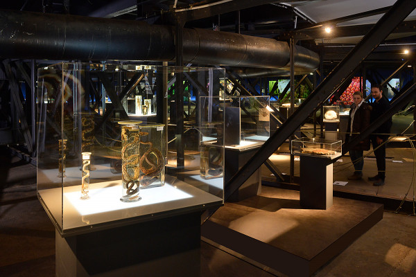 Ausstellungsvitrinen und Schaukästen auf der zweiten Ausstellungsebene